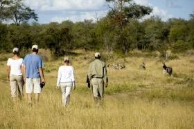Bush walk, Ngala Tented Camp