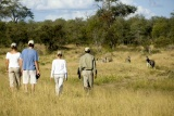 Guided Bush Walk, Ngala Tented Camp