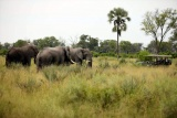 Nxabega okavango tented camp elephants on game drive