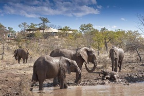 Elephants at Elephant Camp