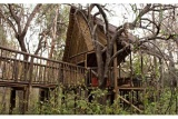 Exterior View of Tree House at Jaci's Tree Lodge, Madikwe Game Reserve