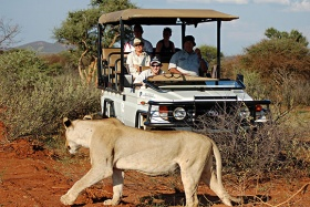 Queen of beasts on safari, Madikwe River Lodge