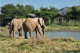 Elephants come to drink at the waterhole, Tau Game Lodge