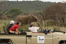 Elephants viewed from open safari vehicles, Thakadu River Camp, Madikwe