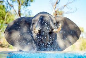 Mammoth Visitor at Kambaku River Sands