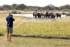 Elephant visitors at The Hide