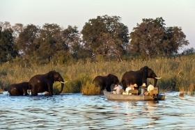 DumaTau elephant watching