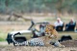 Old Mondoro leopard game drive
