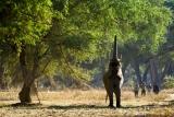 Old Mondoro walking safari