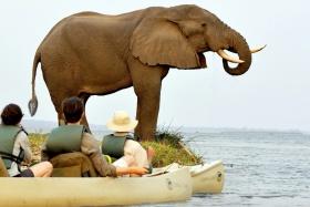 Chiawa elephant by canoe
