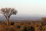 Madikwe landscape