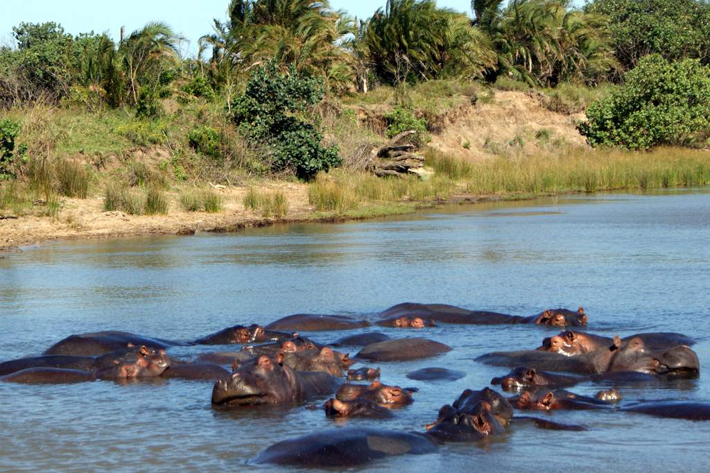 Greater St. Lucia, Hippo pod by