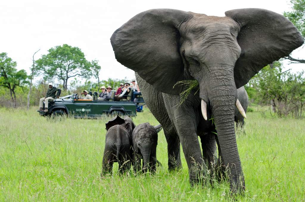 Elephant with babies, Sabi Sand Reserve by