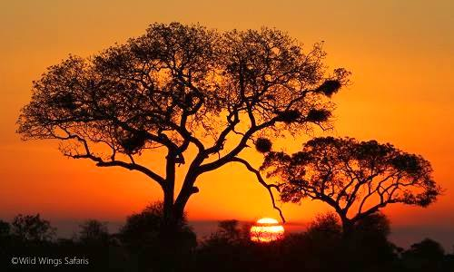 Fiery sunset at Kruger National Park by Another amazing African sunset