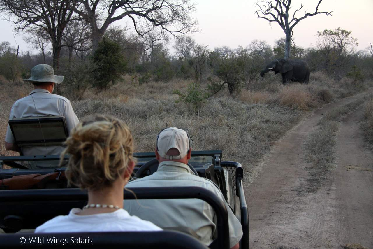 Game viewing drive - elephant  by Elephant seen on game drive