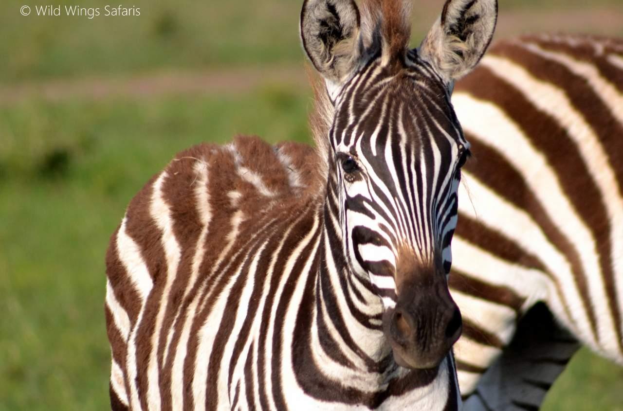 How to avoid the 10 most common safari 'mistakes' | Wild ...