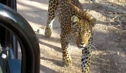 10 Greatest Amateur Safari Videos of All Time