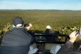 Open safari vehicle game drive, Eastern Cape  by