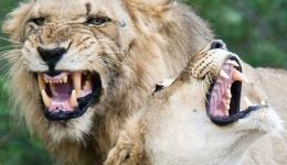 Pairing Southern Africa's Top Safari Destinations