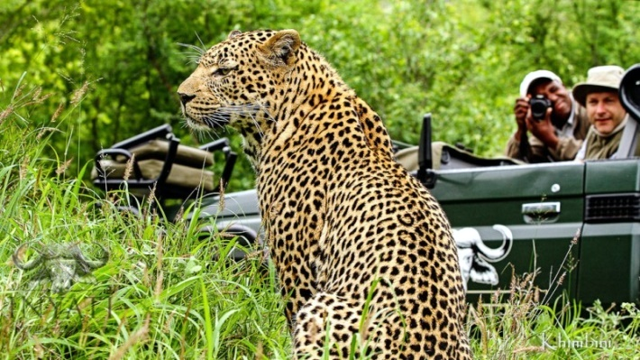 Leopard sighting by