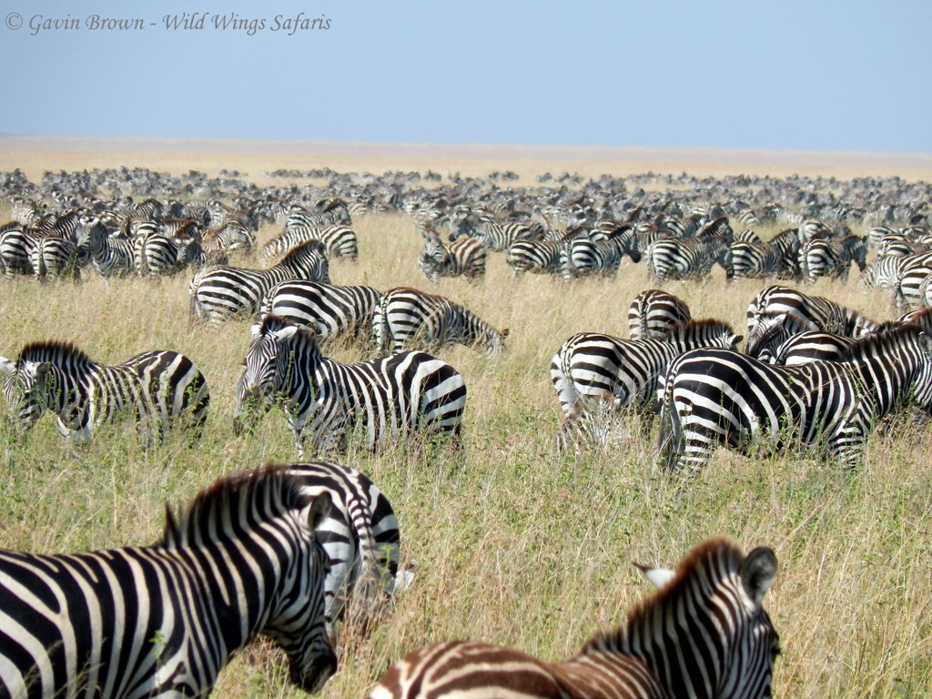 On Safari in East African Safari – Is it everything it's cracked up to be?