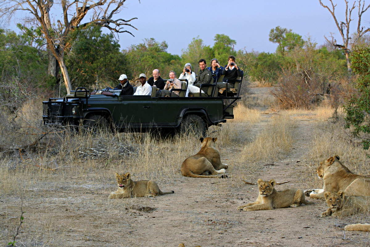 Lions on Game Drive by
