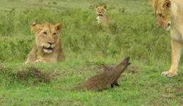 Watch David take on Four Goliaths!