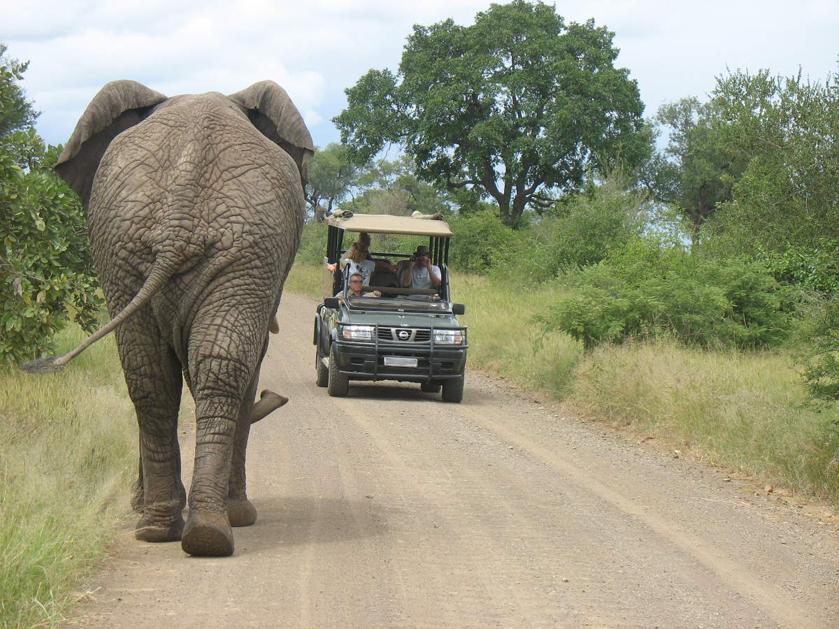 What's the key to a great safari? by