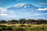 Elephants Mount Kilimanjaro