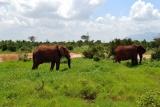 Elephants Tsavo East National Park, Kenya