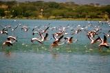 Flamingos Lake Naivasha, Kenya