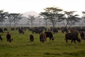 Game on plains of Maasai Mara
