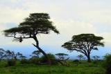 Amboseli national park scenery
