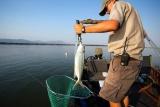 Tiger fishing, victoria falls