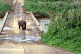 Imfolozi-game-reserve-rhino