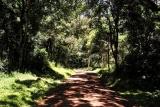 Arusha national park- jungle road