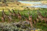 Giraffes at Arusha National Park