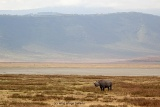 Rhino in Ngorongoro Crater