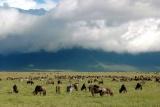 Ngorongoro plains animals with clouds