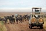 Game drive in Serengeti