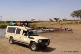 Serengeti game viewing