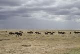 Serengeti plains game