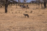 Game in Selous - image by George