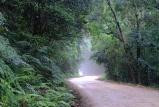 Knysna Forest