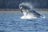 Whale-big