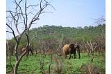 Elephants in malaria-free Madikwe Game Reserve