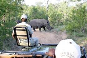 Open safari rhino viewing Greater Kruger Park