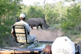 Open safari rhino viewing Greater Kruger Park