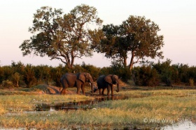 Elephants at Hwange