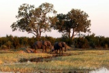 A family of elephants at Hwange